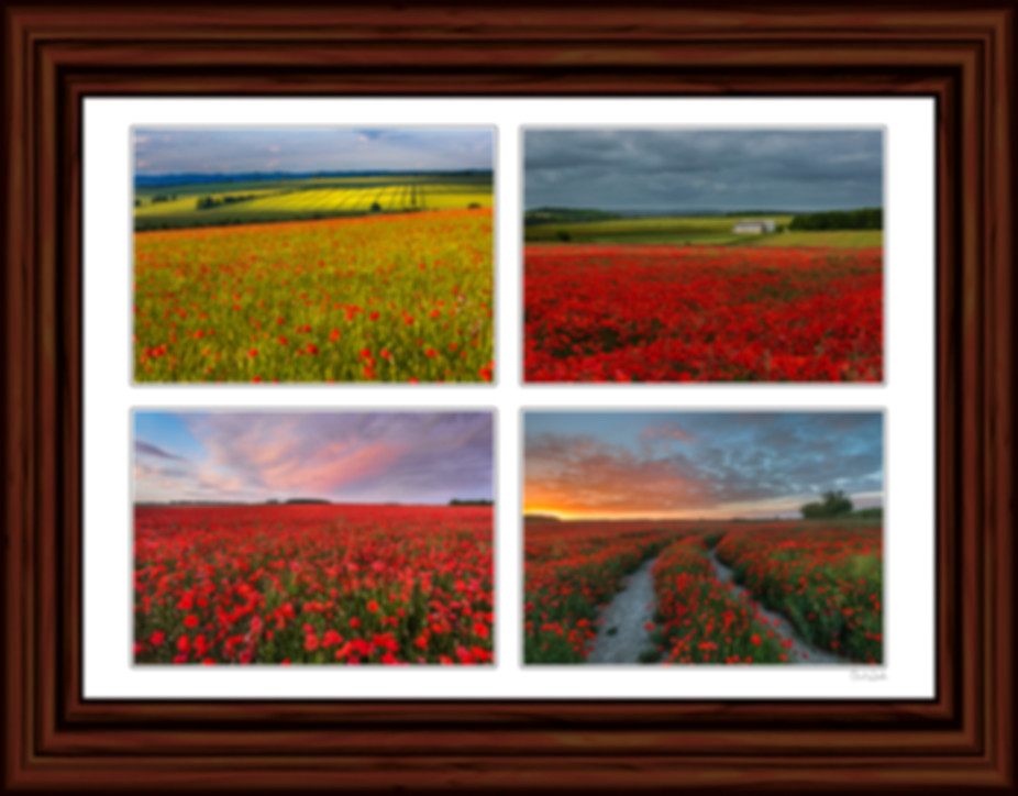 Poppies Picture, Dorset Poppies Picture, Lest We Forget, We Will Remember Them