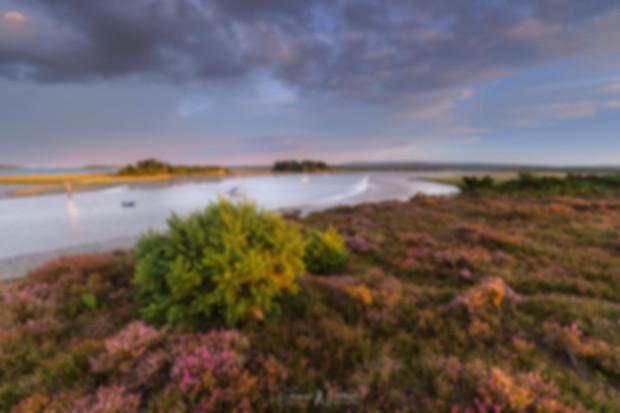 Dorset-Heathland-Lakes.jpg