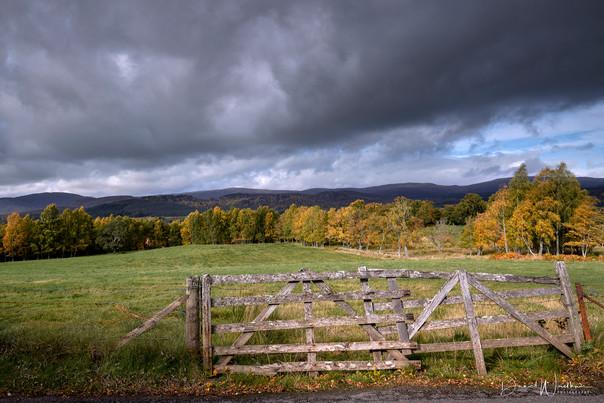 The Autumn Gate