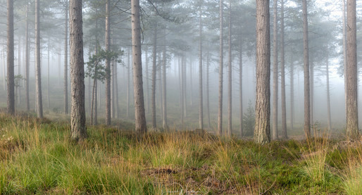 Light & Fog