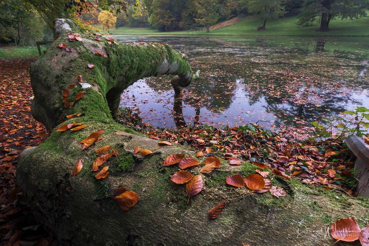 Autumn Reach