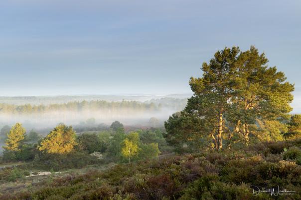 Morning Light & Mist