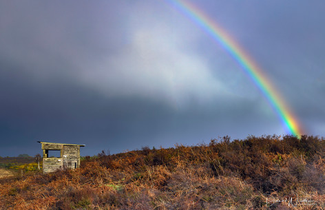 New Forest Rainbow