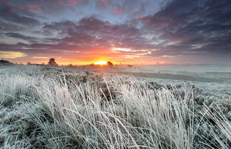Winter Sunrise on the Heath