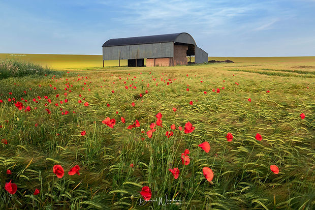 Poppy-Fields.jpg