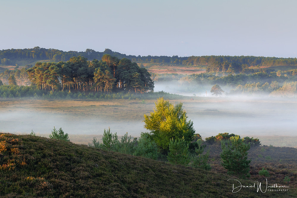 The New Forest Mist, Hampshire Landscape Photographer