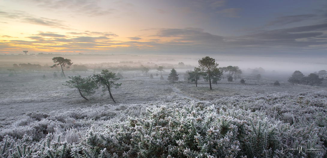 Winter on Canford Heath