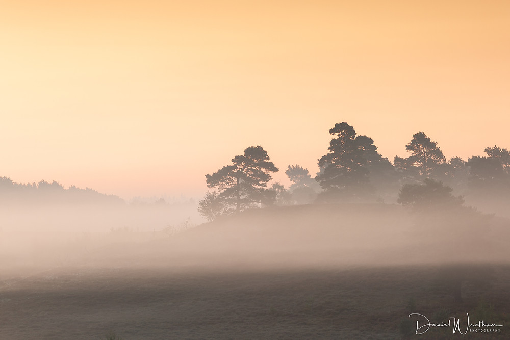 New Forest Mist, Hampshire Landscape Photography