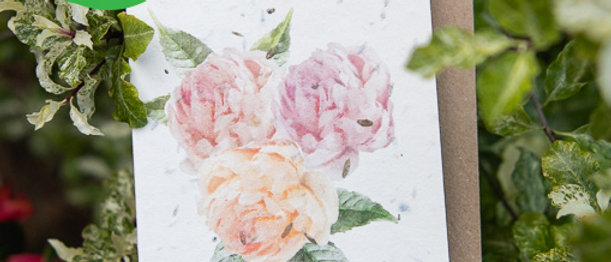 water colour peony rose greeting card