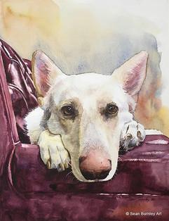 Sophie the Dog