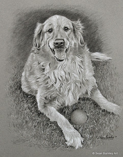 Sam, a dog with his ball