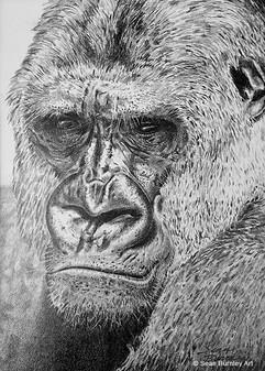 Graphite Gorilla