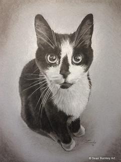Oreo the tuxedo cat