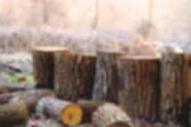depth-of-field-photography-of-brown-tree