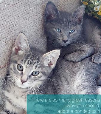 wonder kittens.jpg
