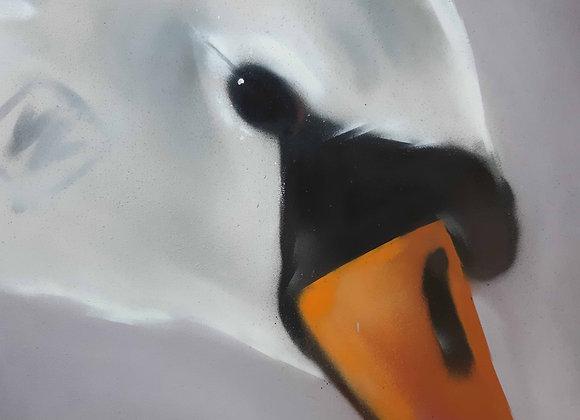 TACKLE, Swan