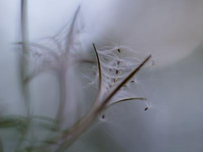 Cage à graines