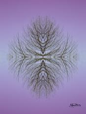 Cristal d'arbre N°16