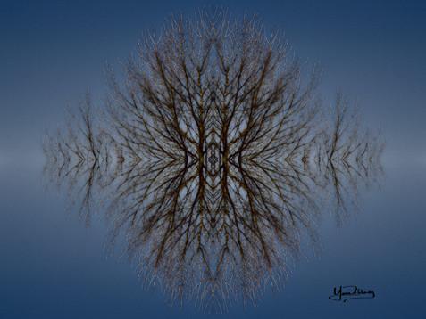 Cristal d'arbre N°17