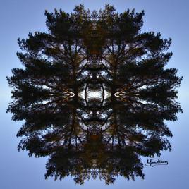 Cristal d'arbre N°1