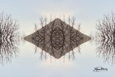Cristal d'arbre N°23