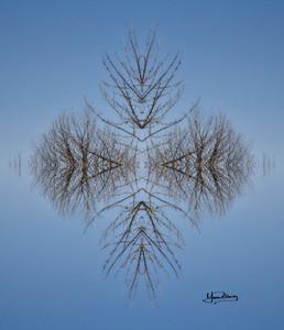 Cristal d'arbre N°20