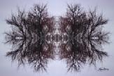 Cristal d'arbre N°11