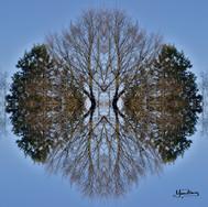 Cristal d'arbre N°12