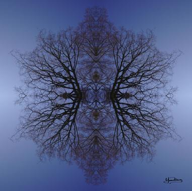 Cristal d'arbre N°14