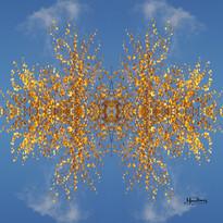 Cristal d'arbre N°29