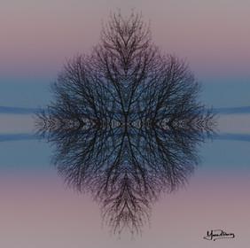 Cristal d'arbre N°4