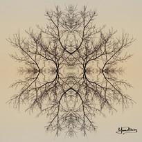 Cristal d'arbre N°21