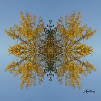 Cristal d'arbre N°28