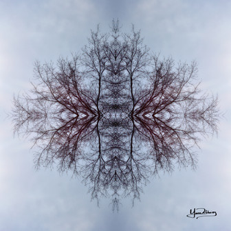 Cristal d'arbre N°9