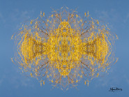 Cristal d'arbre N°34