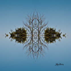 Cristal d'arbre N°19