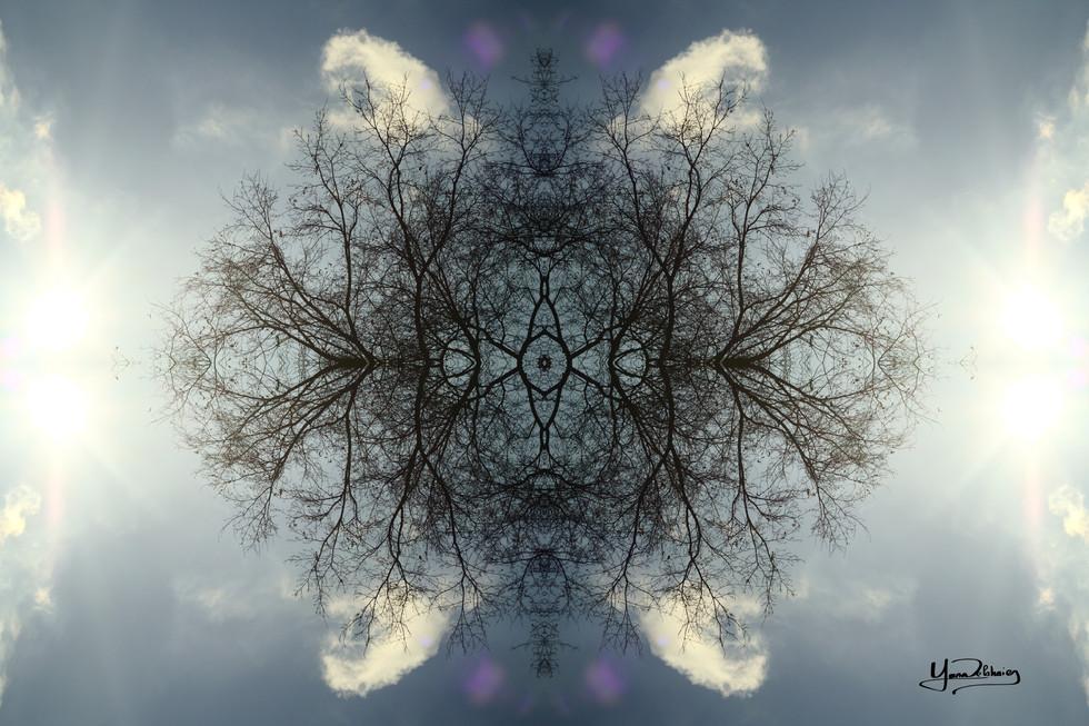 Cristal d'arbre N°48
