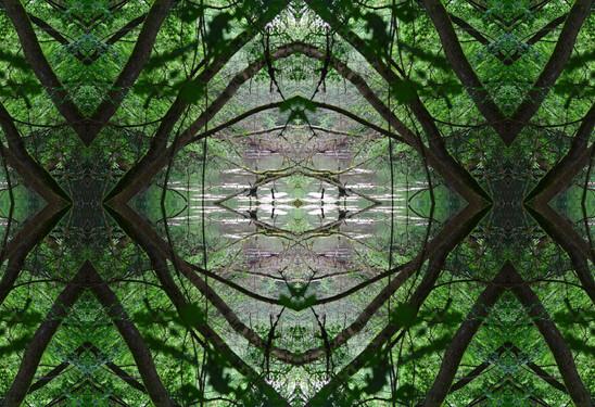 Terre - esprit de la forêt