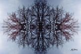 Cristal d'arbre N°10