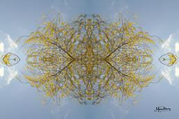 Cristal d'arbre N°38