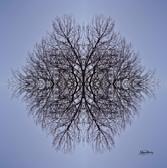 Cristal d'arbre N°6
