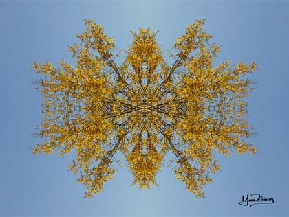 Cristal d'arbre N°27