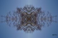 Cristal d'arbre N°13
