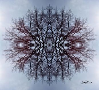 Cristal d'arbre N°8