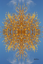 Cristal d'arbre N°32