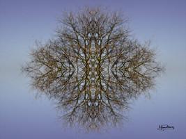 Cristal d'arbre N°18