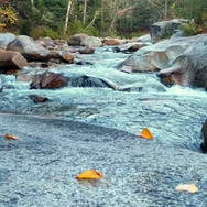 Harpscape #23: Ammonoosuc Cascades in Autumn