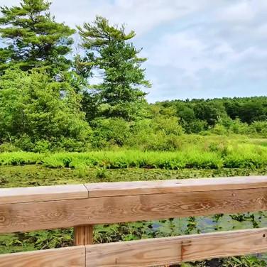 Harpscape #8: A Walk in Nature Part 2