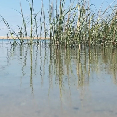 Harpscape #24: Wellfleet Bay Beach and Marshes