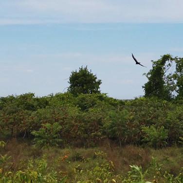 Harpscape #13: Birds at Plum Island